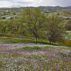 Michael Hansen: A High Sierra Portfolio