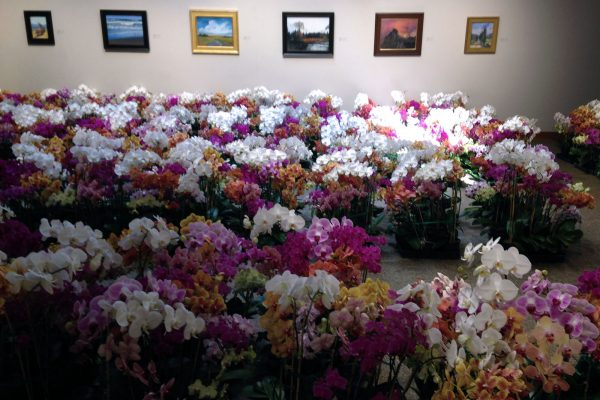 Annual Orchid Sale